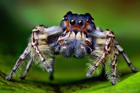 http://www.jigsawexplorer.com/puzzles/subjects/jumping-spider-449x300.jpg