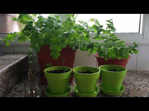 حديقة فوق سطح منزلي 1 Youtube Plants Planter Pots Planters
