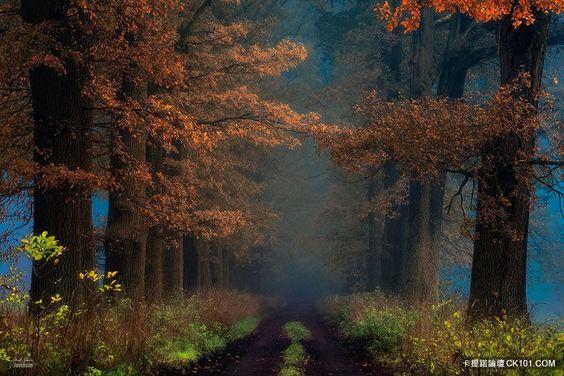 離人心上秋意濃!讓你痛上加痛失戀私房景點:秋風落葉一次讓你哭個夠 - 寰宇圖集 - 卡提諾論壇 - 秋季,攝影集