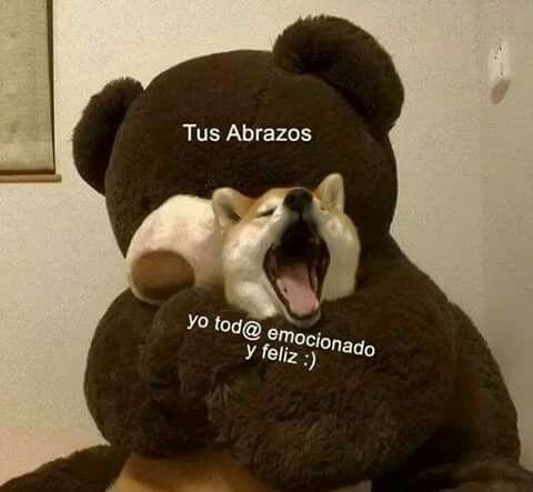 Pin De Dayanna Mosquera En Sweet Amor Animales Frases Memes Para Mi Novio Memes Divertidos