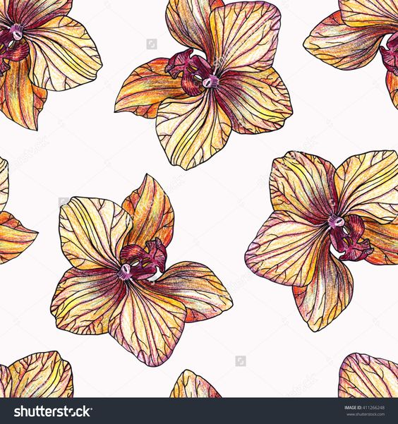 Color Pencil Draw Orchid Pattern On White Background