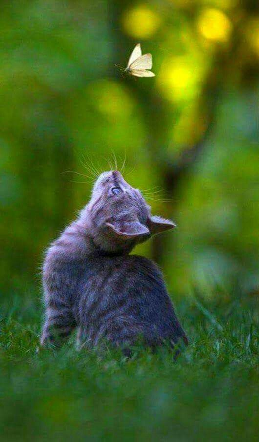 蝶と遊ぶ野良猫の子)