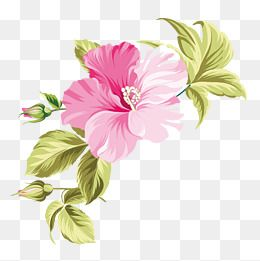 Hawaii Hand Painted Flowers Hawaii Tropic Hand Png Transparent Clipart Image And Psd File For Free Download Flower Graphic Flower Painting Vector Flowers