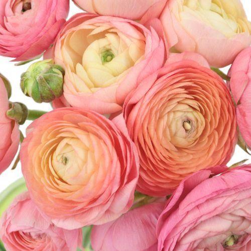Ranunculus Plant Vines In 2020 Ranunculus Flowers Wedding Flowers Peonies Wholesale Flowers