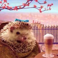 Image result for hedgehog
