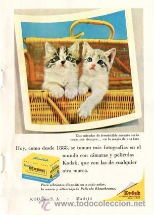 Página Publicidad Original *KODAK. Diapositivas EKTACHROME* Gatitos cesta mimbre - Año 1957: