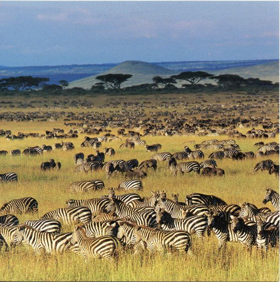 Serengeti National Park | UNESCO-gforpcrossing: Tanzania - Serengeti National…: