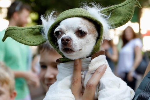 Pure Cuteness Doggy Con Draws Hundreds Of Dressed Up Dogs From