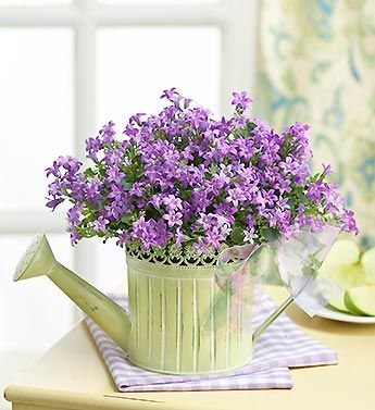 Spring's blooming watering can