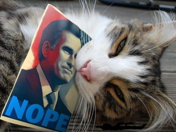Cats against Romney