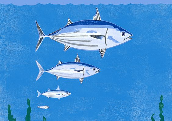 Certified Sustainable Seafood on Illustration Served