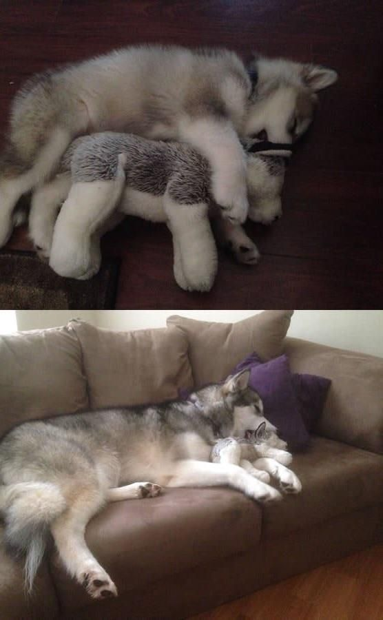 Then and now. She destroys every stuffed animal except this one. Click here to check out our $1.99 sale for cute animal merch!