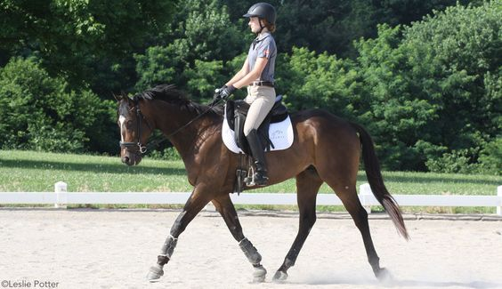 Dressage Mysteries Solved~In part one of this two-part series, learn to get your horse on the bit the right way with Jane Savoie.