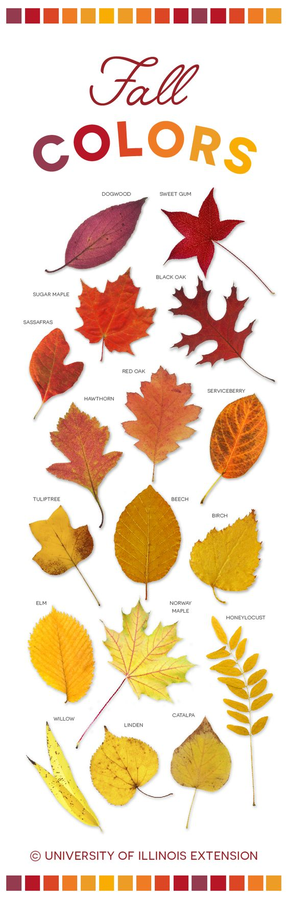 Fall Colors #leaves #autumn #beautiful #infographic