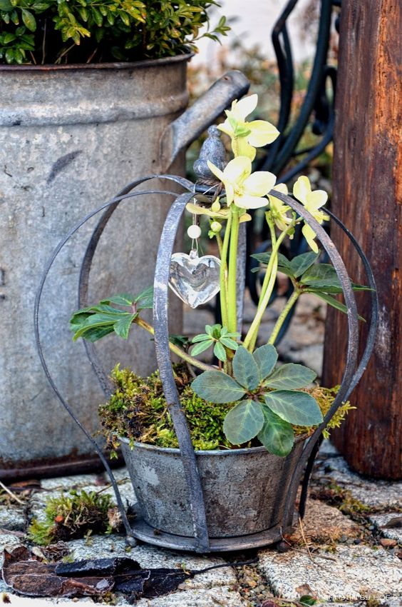 Helleborus, Kanz aus Weinruten, DIY Frühlingskranz, Frühlingskranz, Dekoration aus Weinruten, Dekoration mit Helleborus
