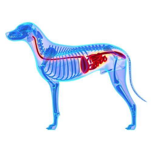 Consejos Para Alimentar A Perros Con Estómago Sensible Mis Animales Recetas De Comida Para Perros Comida Casera Para Perros Alimento Perros