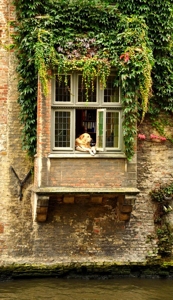 Dog's Life, Bruges, Belgium This guy was there too when I was there in October...guide says he is there all the time!  Loved him!: