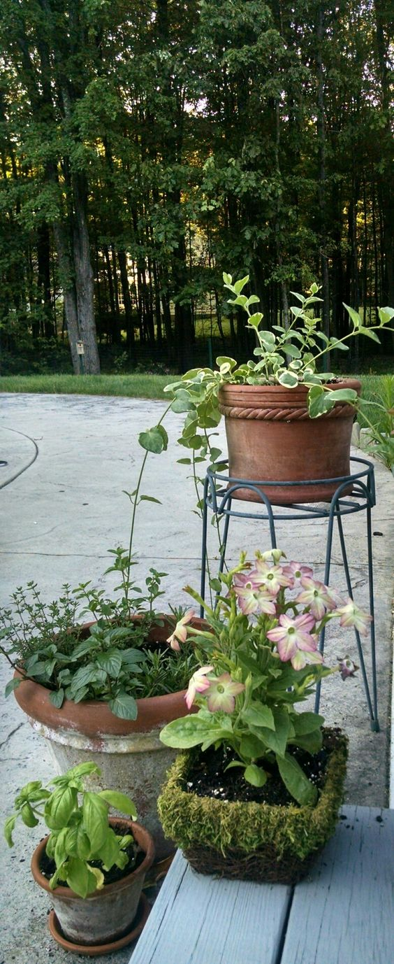 Nicotiana and herbs