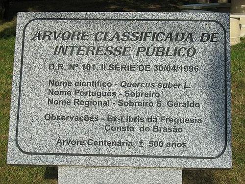 Placa referente ao SOBREIRO de VEIROS - Estarreja - Portugal