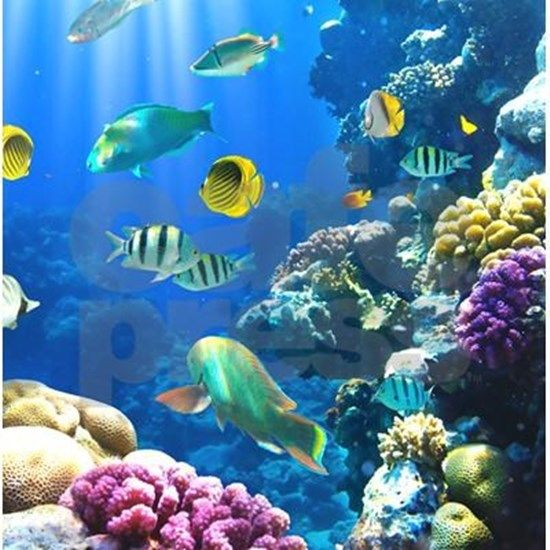 Ocean Life Shower Curtain By Daecu Cafepress In 2020 Under The