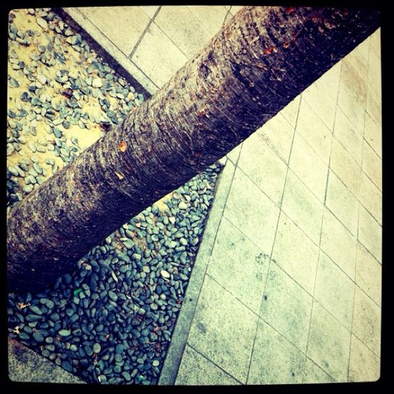 everyday tree by Jey Park with instagram filter