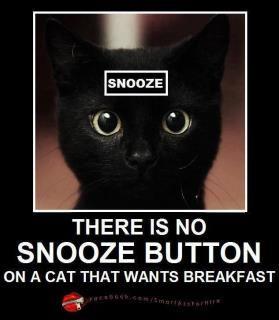 O melhor Despertador :)