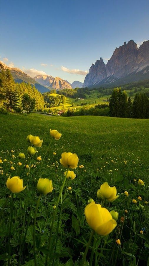 """Field of Flowers; this reminds me of The Sound of Music; """"the hills are alive"""""""
