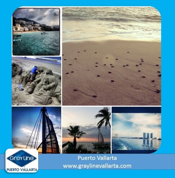 the best place of the world - PUertoVallarta   turtles  release