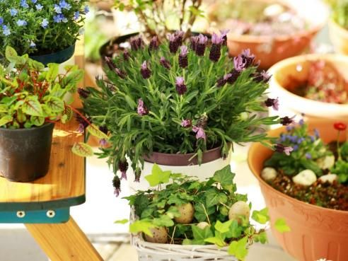 Utilisez le chlorure de magn sium pour vos plantes vertes for Catalogue plantes vertes