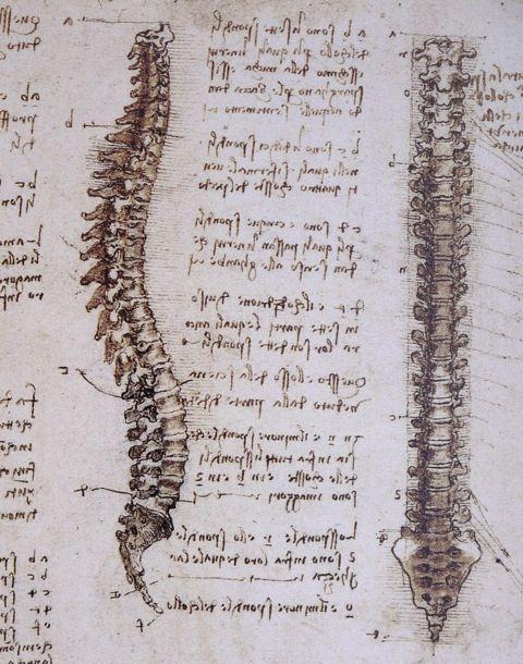 Why is Leonardo Da Vinci's anatomy studies so important today?