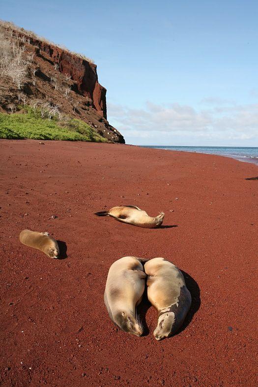 Galapagos Vacations Sea Lions Galapagos Islands Tourism - Galapagos vacations
