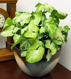 house plants identify by pic dozen fantastic foliage house plants - Identifying Common House Plants