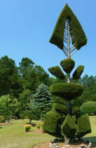 Pearl Fryar Topiary Trees Google Image Result for http://www.sciway.net/i/pearl-fryar/pearl-fryar-fishbone.jpg