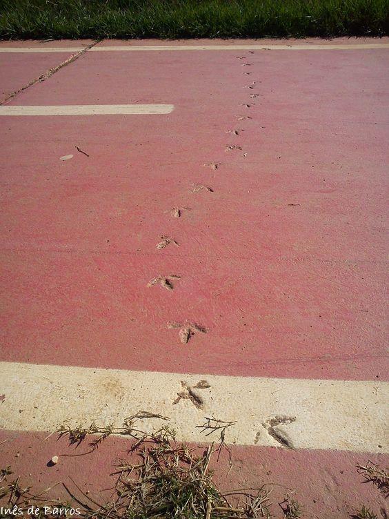 Caminhar é deixar marcas por onde se passa.