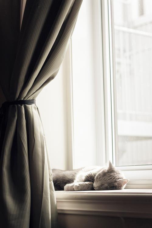 Beautiful sleeping cat in a window sill in Paris on Hello Lovely Studio