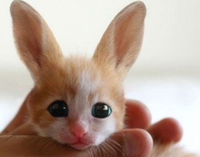 A baby Fennec Hare from North Korea's Pyongyang People's Zoo.