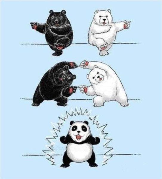 Panda Z Fusion !