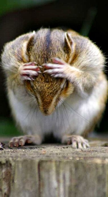 Where'd I bury the acorns...I need to concentrate?!?!