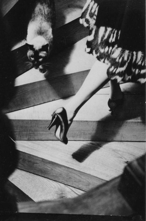 Frances Pellegrini :: Fashion photography, 1950′s