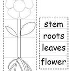 Have students cut and paste to create a plant flip book!  Students practice identifying the parts of plants and their respective jobs in helping th...