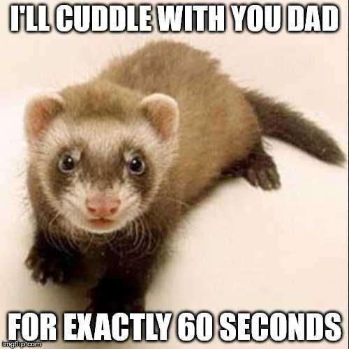 5 Ferret Stories Facts From My Life Baby Ferrets Pet Ferret Ferret