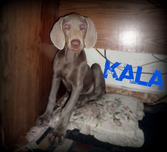 Mi Kala!