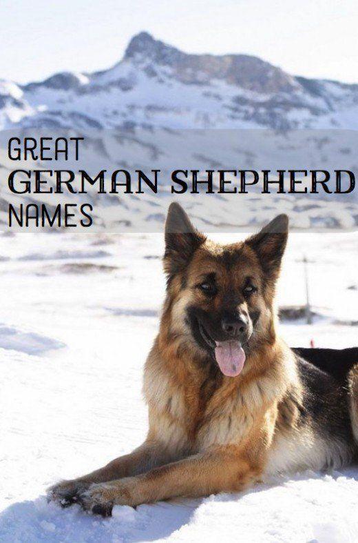 Good German Shepherd Name Ideas German Shepherd Names Dog Names