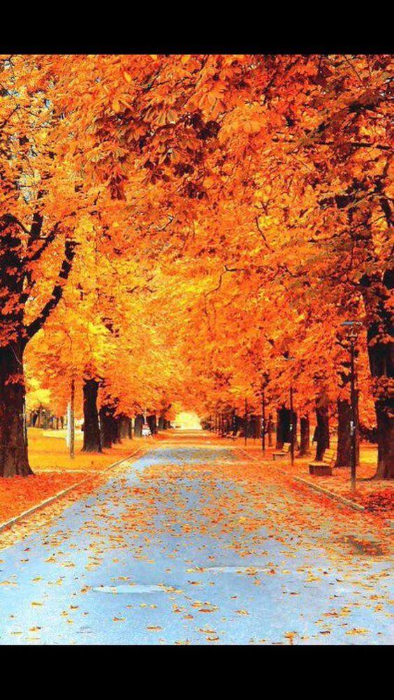 Картинки про осень в архивах