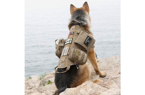 Top 10 Best Tactical Dog Harnesses Dog Vests Reviews In 2020