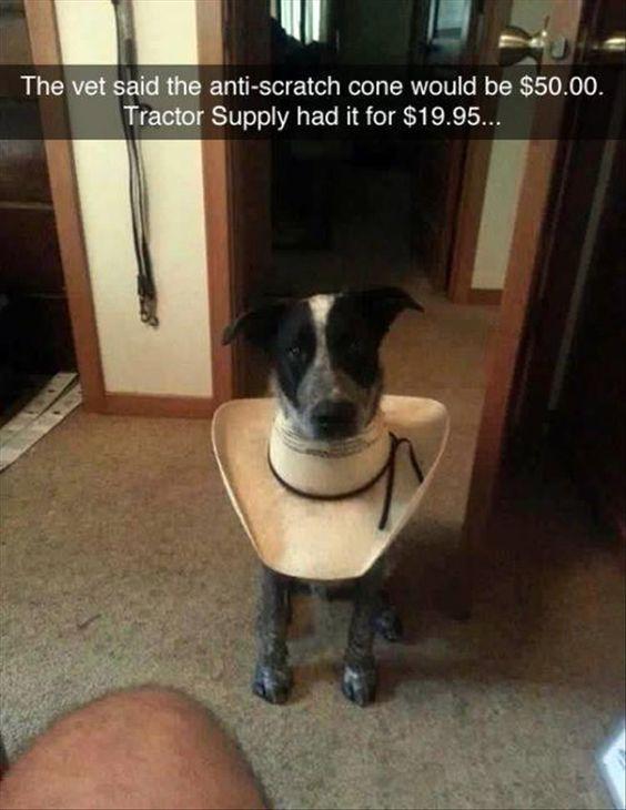 Funny DIY Dog Anti-scratch Cone