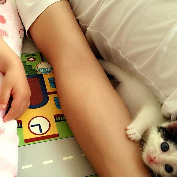 ゴマちゃんとお昼寝親子 この後ゴマちゃんは自分のゲージのお家で お昼寝しました #パパっ子  #子供と猫  #cat  #gomachan  #家族とペット by gomastagram0507 http://www.australiaunwrapped.com/
