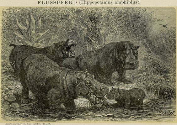 Hey, I found this really awesome Etsy listing at https://www.etsy.com/listing/180099577/1894-matted-hippo-family-print