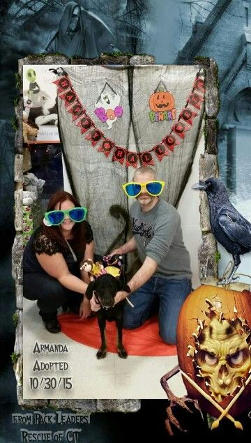 #Adoptionphoto of #adoptedpuppy. #Halloweenadoptions from #PackLeadersRescue of #CT at #ManchesterCT #Petsmart.