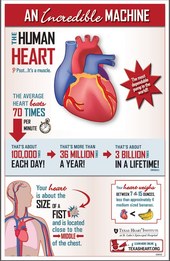Fun facts about the human heart, an incredible machine.: